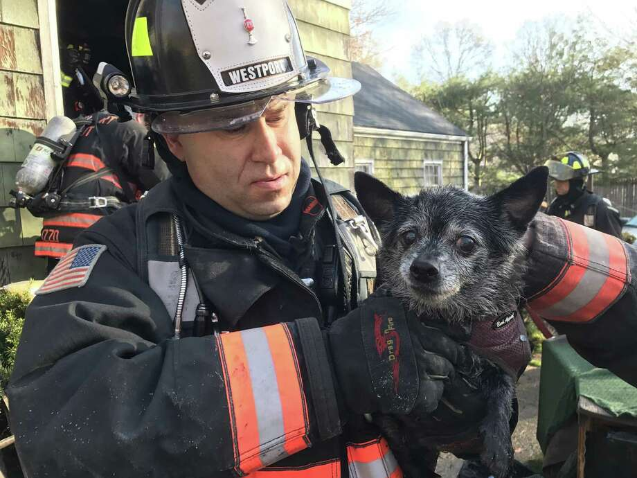 A Westport firefighter holds one of two dogs rescued from a house fire on Cross Highway on Monday. An occupant inside the house was also rescued by police. Photo: Contributed Photo / Connecticut Post Contributed