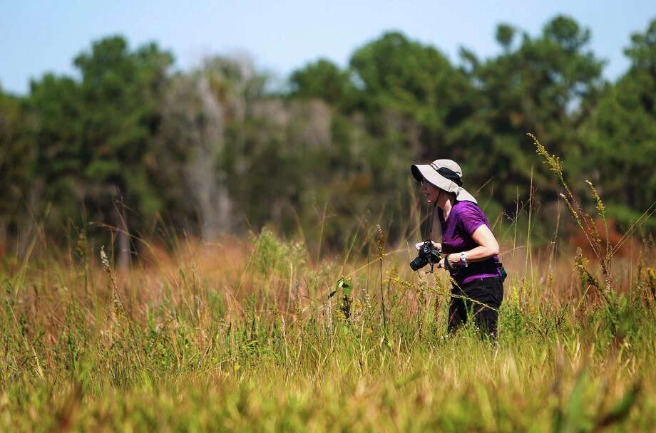 Alison Steele hikes at the restored coastal wetland prairie at Sheldon Lake State Park in Houston in 2015. Photo: Mark Mulligan, Staff / © 2015 Houston Chronicle