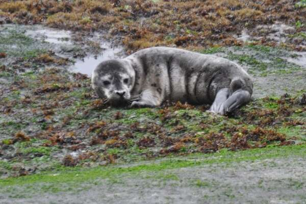 A harbor seal pup was reunited with its mother at Point Lobos State Natural Reserve in Carmel after good samaritans called the Marine Mammal Center's 24-hour rescue hotline.