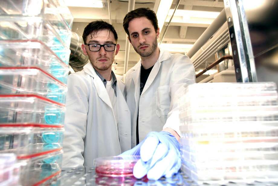 Brian Wyrwas (left) and Mike Selden are co-founders of Finless Foods in Emeryville, a start-up developing lab-grown seafood. A new report from the World Resources Institute calls for innovations in animal-based foods to reduce land use and greenhouse gas emissions. Photo: Michael Macor / The Chronicle 2017