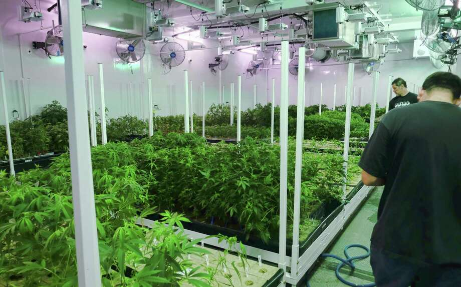 A joint venture involving a Texas Medical Center-based startup, a San Antonio company and a Houston company that specializes in indoor vertical farming is bidding for one of the first licenses to dispense medical marijuana in Texas. Photo: Richard Vogel /Associated Press / Copyright 2017 The Associated Press. All rights reserved.