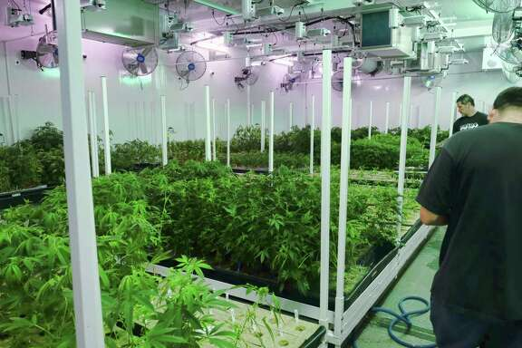 A joint venture involving a Texas Medical Center-based startup, a San Antonio company and a Houston company that specializes in indoor vertical farming is bidding for one of the first licenses to dispense medical marijuana in Texas.
