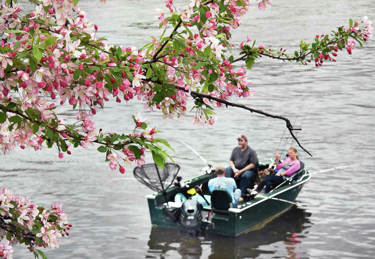 David and Tamie Mease of Schaghticoke drift below apple blossoms with guide Capt. Brian McGowan, left, of Adirondack Outdoor Adventures as they fish for striped bass in the Hudson River Saturday April 29, 2017 in Troy, NY. (John Carl D'Annibale / Times Union)