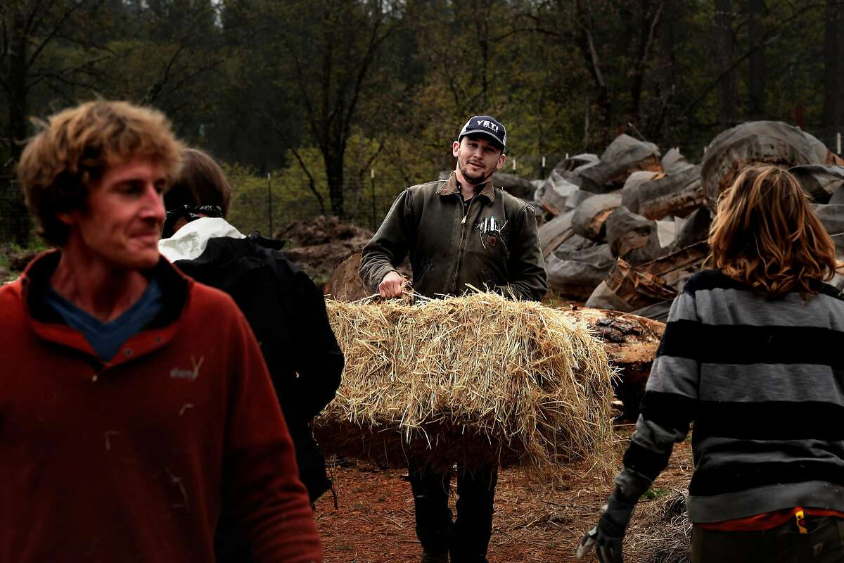 Caz Tomaszewski, (center) the president of Calaveras Cannabis Alliance, is seen on a friend's cannabis farm, preparing the site for June plantings, in Mountain Ranch, Ca. on Wednesday April 26, 2017.