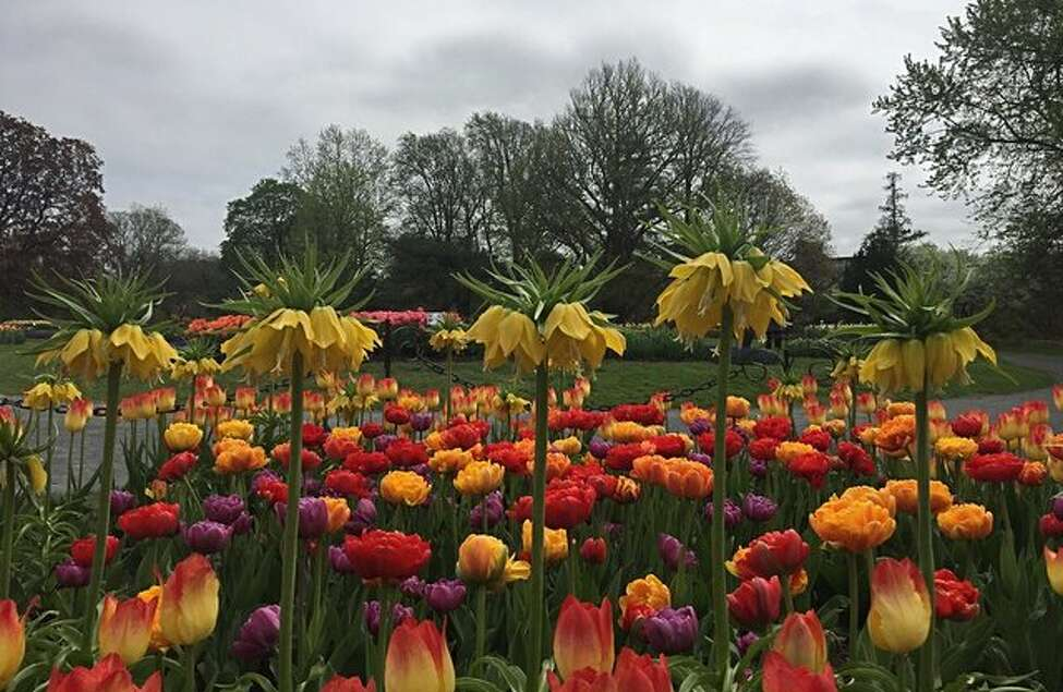 May 1 was a cloudy day. The average temperature was 62 degrees. 0.65 inches of rain fell. Tulips and fritillarias bloom among profusion of flowers in Albany's Washington Park on Monday, May 1, 2017. (Amanda Fries/Times Union)