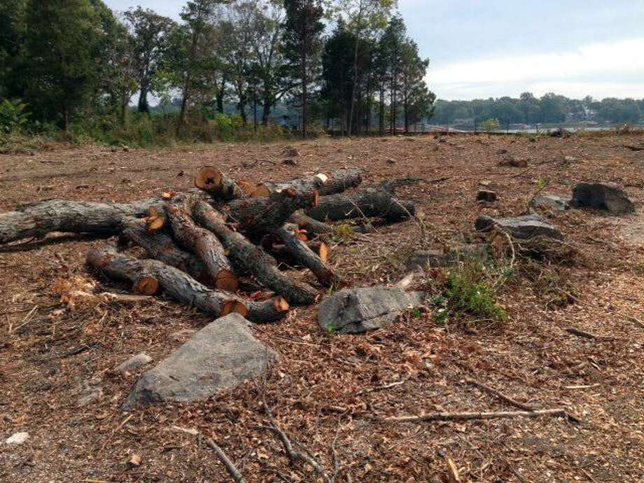 A large quantity of trees were clear cut without permission at 122 Delafield Island Road in Darien, as seen in this 2014 photo. Photo: Contributed Photo / Contributed / Darien News Contributed