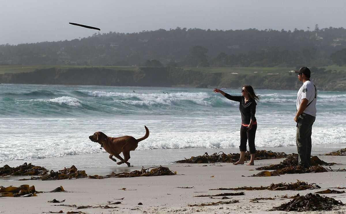 California Carmel's Dog Beach