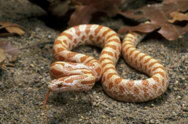 It's snakebite season  Here's what you should know