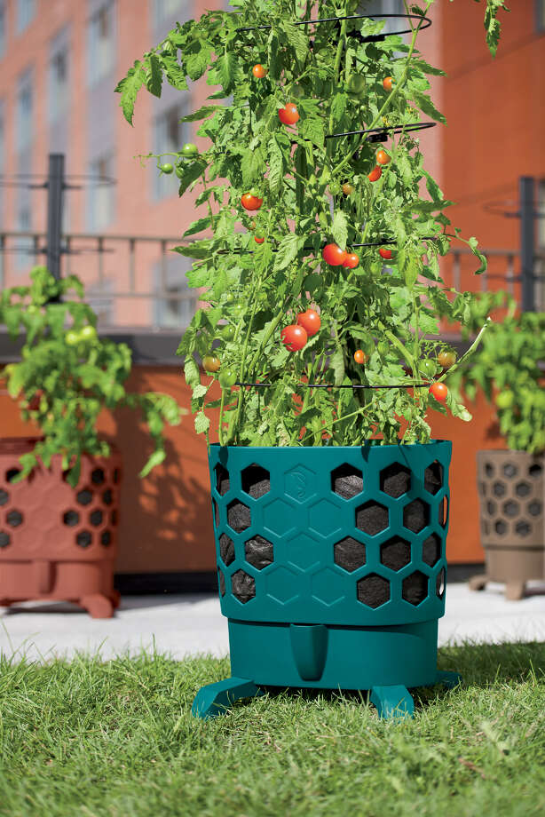 Growing tomatoes in container gardens enables gardeners to jump start the growing season. Photo: Gardener's Supply Company