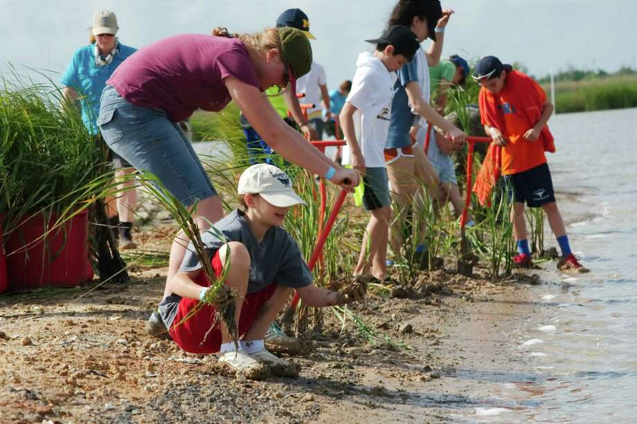 Trisha Van Wyk digs while Emma Miller plants marsh grass on April 22 during an effort to restore the grass along the polluted the Dickinson Bayou watershed. Planting the grass is one way to help restore the bayou since the plants filter pollutants. Local goverments and groups are participating in an effort to improve water quality in the watershed. Photo: Kirk Sides / Houston Chronicle / © 2017 Kirk Sides / Houston Chronicle