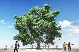 Courtesy of Tree of Tenere