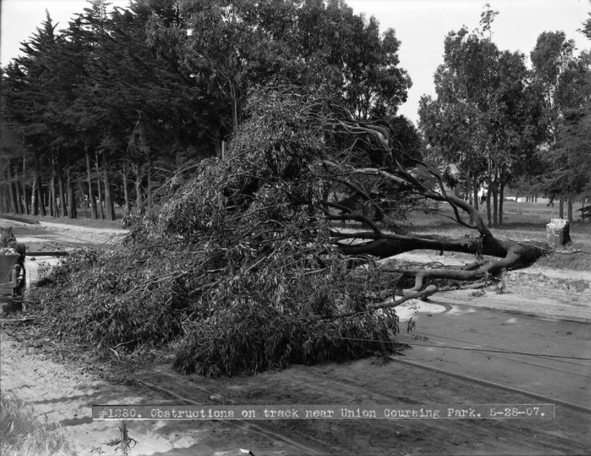 Strikers felled trees across streetcar lines to prevent cars from going through.