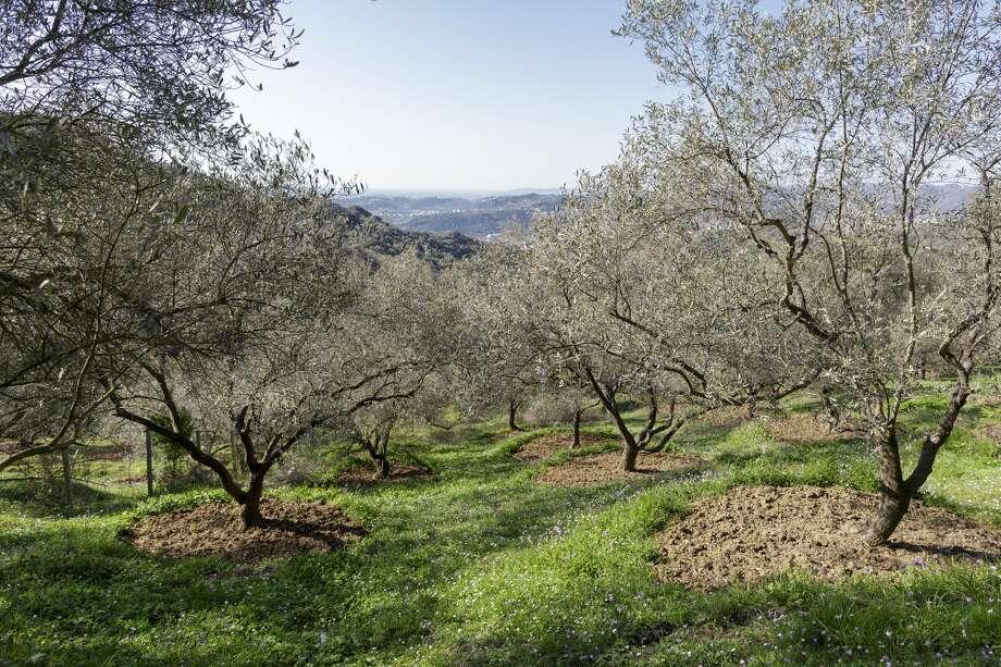 Olive Photo: Thomas Imo/Photothek Via Getty Images