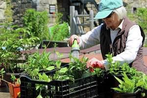 Susanne Miller, a longtime member of the Rowayton Gardeners, helps prepare for the annual Plant and Tag Sale May 4, 2017 at the Rowayton Community Center.