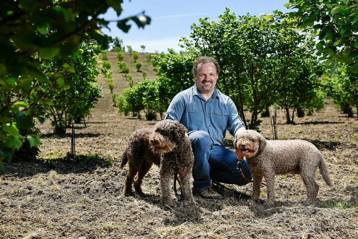 Charles Lefevre, the West Coast�s leading truffle expert, poses for a portrait with his truffle dogs Dante and Mocha in a hazel nut tree orchard in Santa Rosa, CA, on Thursday May 5, 2017.