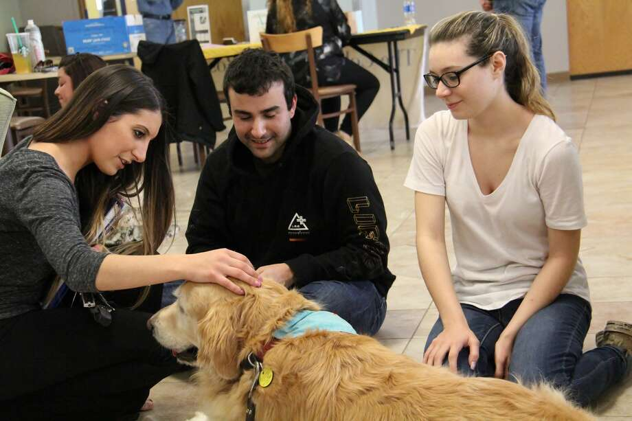 Nearly a dozen therapy dogs visited The College of Saint Rose on May 3 and 4, 2017, to give students a respite from the stress of end-of-semester exams, papers and projects.  The canines are sponsored by the college's Counseling Center and Neil Hellman Library.  Spring semester ends Friday, May 12. (Benjamin Marvin, The College of Saint Rose) Photo: Benjamin Marvin/College Of Saint Rose