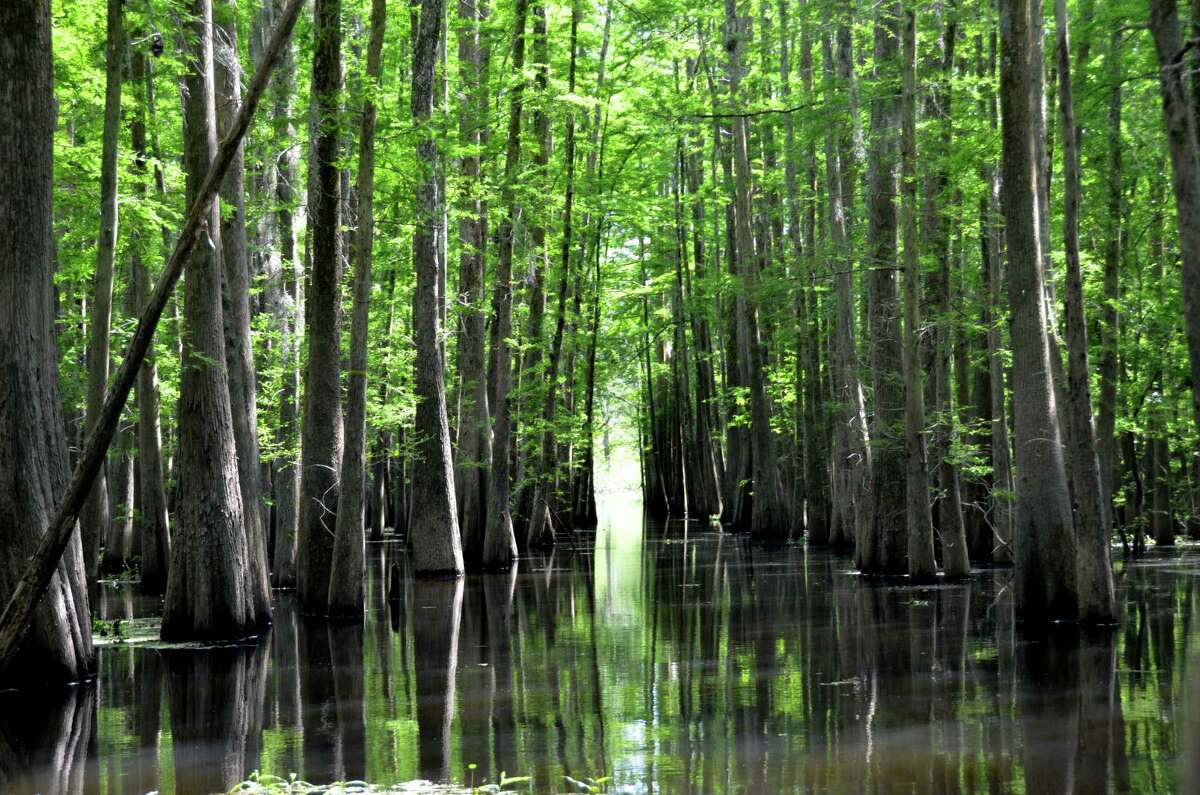 The Atchafalaya River Basin, the country's largest river swamp, lies northwest of New Orleans.