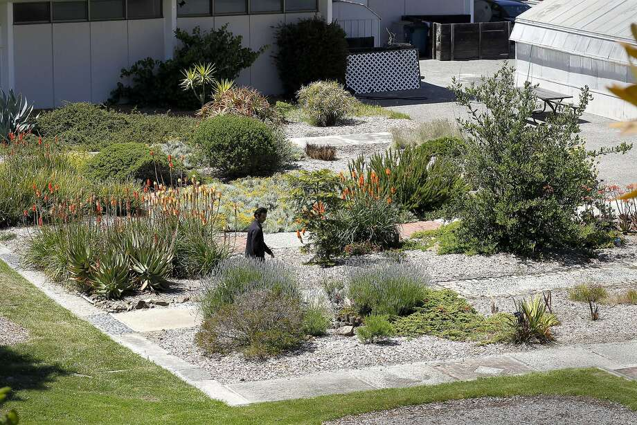 The Friends of the College of San Mateo Gardens oppose a plan to put a parking lot in this space. Photo: Michael Macor, The Chronicle