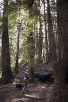 Michael Brandt, of Fairfax, California strolling through Redwoods with his acoustic guitar and his dog Davidson at Roy's Redwoods Preserve located in the San Geronimo Valley in California. May 6, 2017.