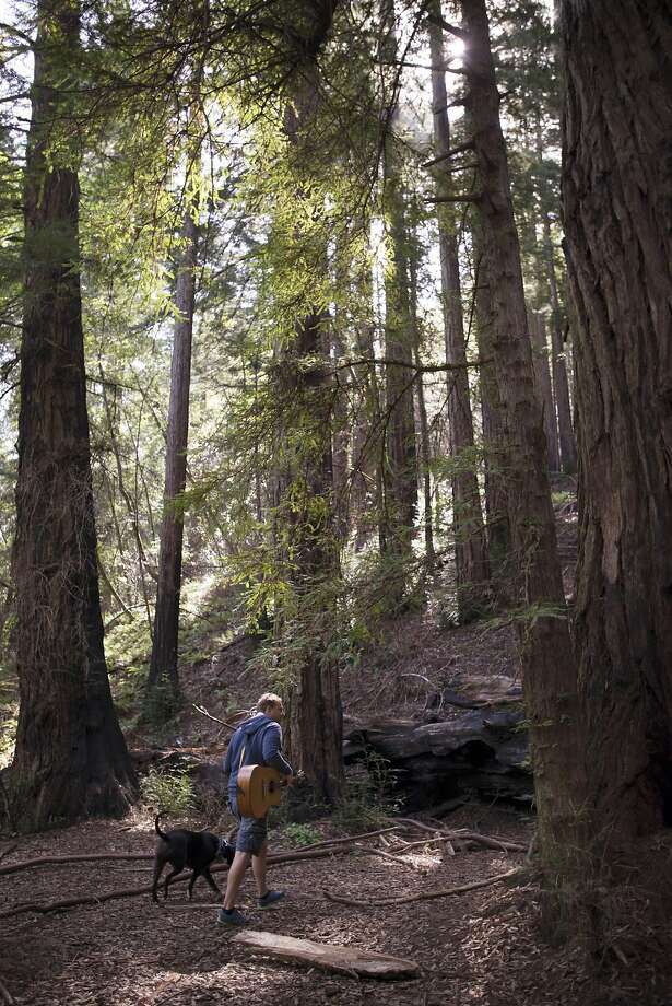 Michael Brandt of Fairfax strolls through Roy's Redwoods Preserve in the San Geronimo Valley with his acoustic guitar and his dog, Davidson. Photo: Erik Castro, Special To The Chronicle