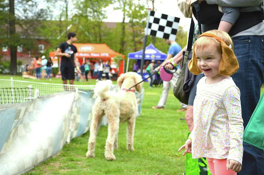 Ella Gartin, 3, of Westport, enjoys the show at the Westport Dog Festival in Winslow Park, Sunday, May 7, 2017, in Westport, Conn. Photo: Jarret Liotta / For Hearst Connecticut Media / Westport News Freelance
