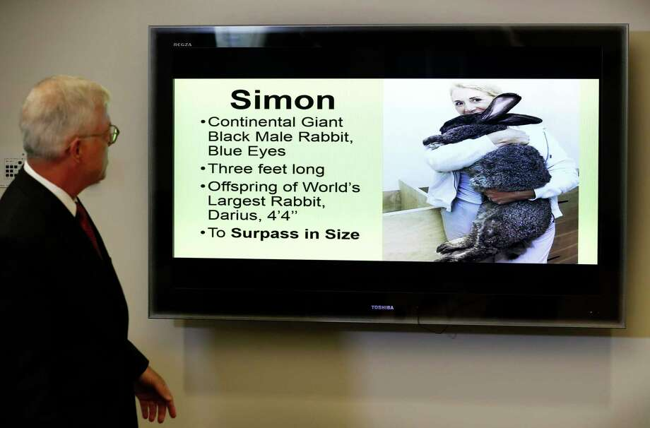 Attorney Guy Cook looks at a photo of Simon, a giant rabbit that died after flying from the United Kingdom to Chicago, during a news conference Monday in Des Moines, Iowa.  Photo: Charlie Neibergall, STF / Copyright 2017 The Associated Press. All rights reserved.