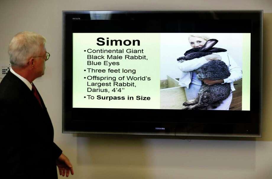 United Airlines denies freezing giant rabbit Simon to death