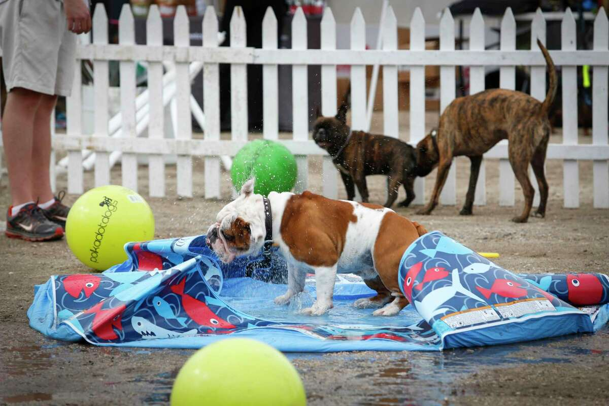 """Puppies for Breakfast, a Saturday morning festival that works to bring everything """"dog"""" to one place for a few hours, comes to Market Square Park this weekend."""