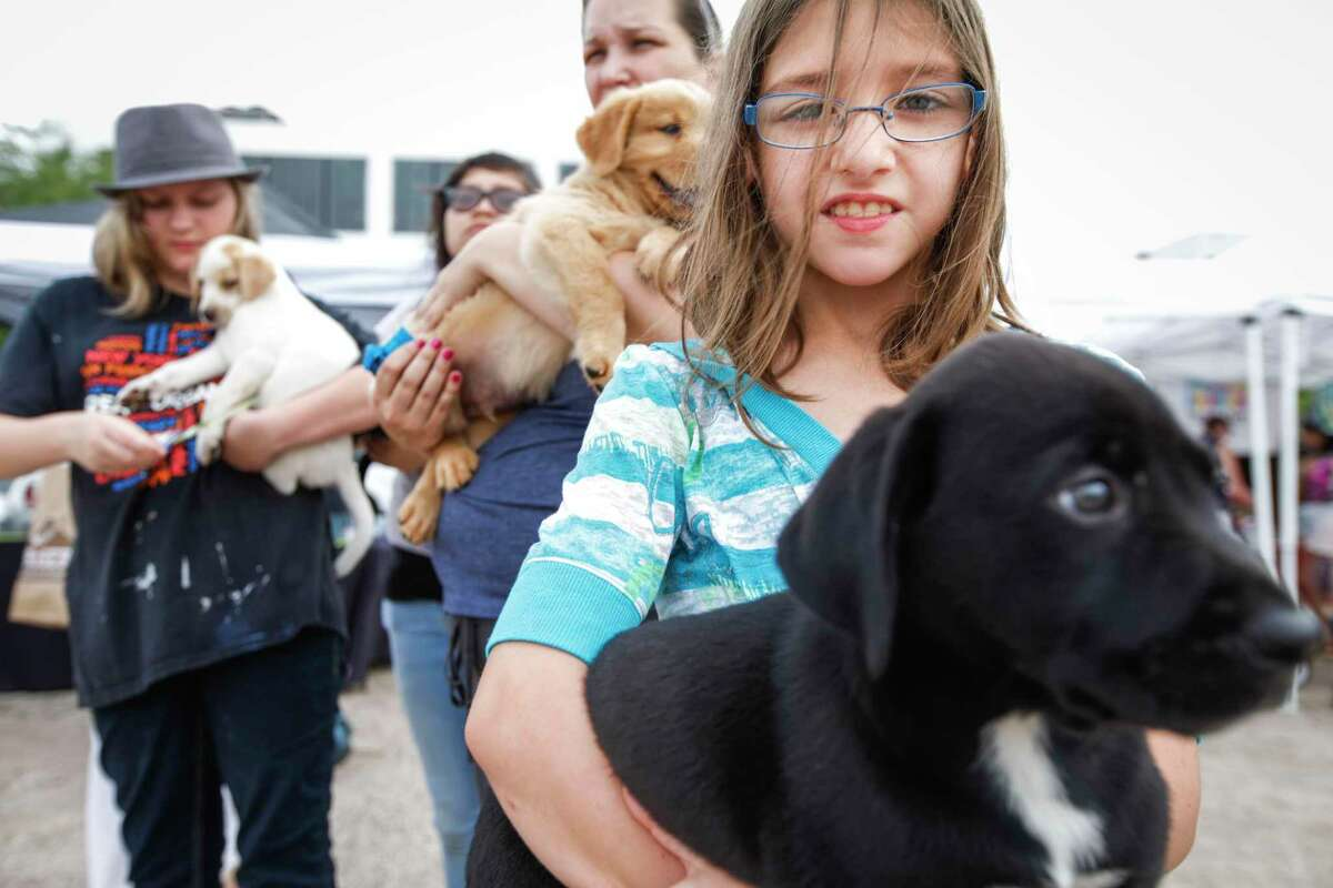 """Abby Schomer, 10, right, with Little Bear, who is up for adoption, attend the Puppies for Breakfast, a morning dog festival that works to bring everything """"dog"""" to one place for a few hours, May 10, 2014 in Houston. (Eric Kayne/For the Chronicle)"""