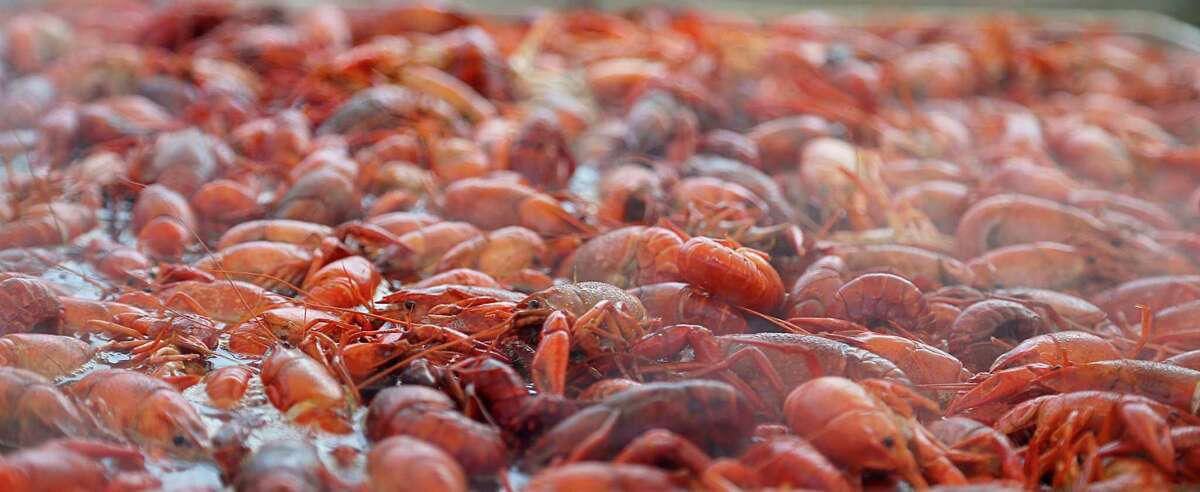 Crawfish being prepared to serve during the Crawfish Festival in the Heights parade Saturday, March 5, 2016, in Houston. ( James Nielsen / Houston Chronicle )