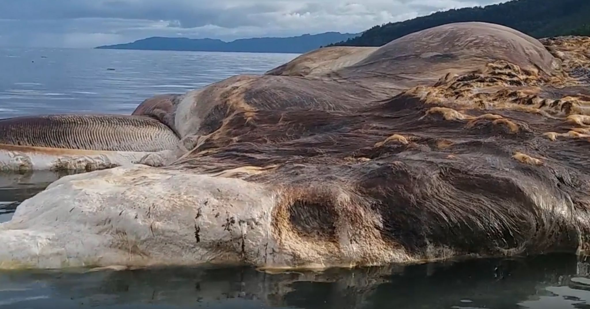 Scientists Identify 50 Foot Creature That Washed Up On An