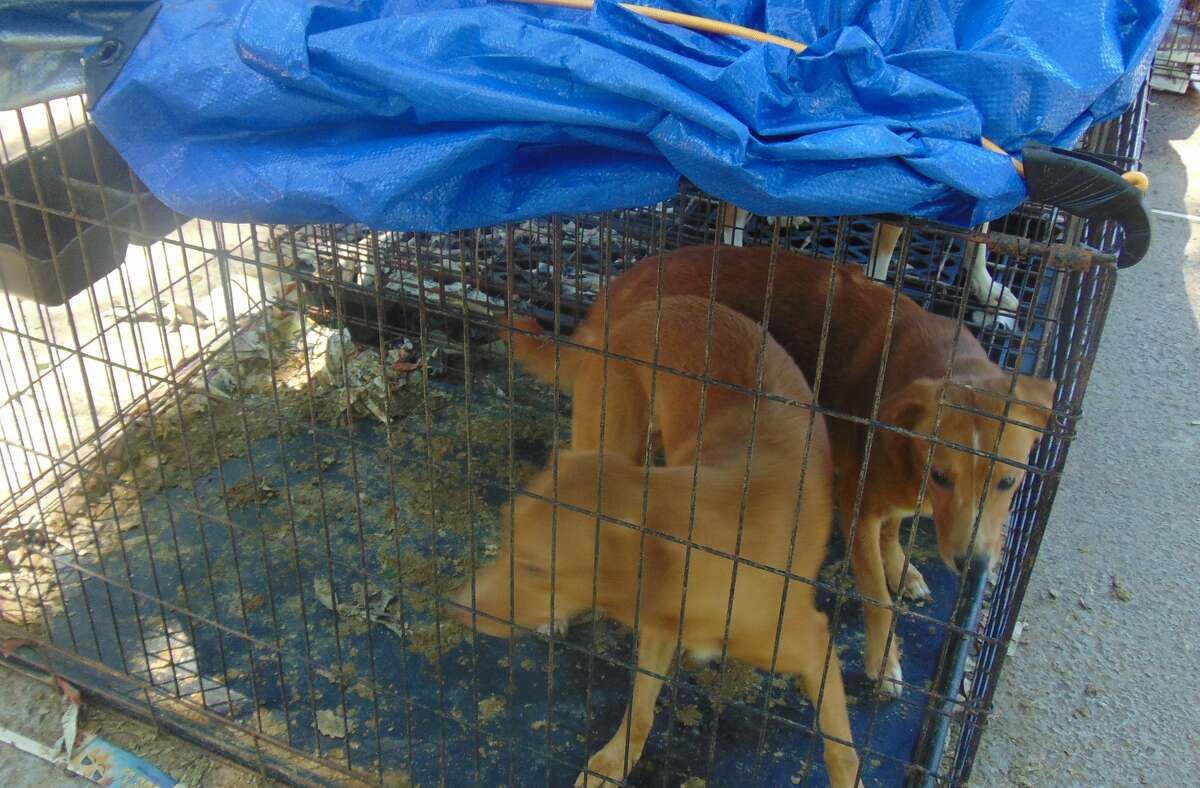 Houston SPCA rescued 66 dogs from Ruff N Fluff in Magnolia on May 11, after allegations of animal cruelty. An address for the facility was not immediately available.