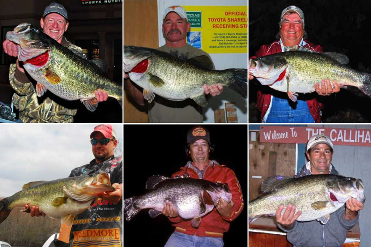 Photos: Sharelunker program's biggest catches The 2017 Toyota ShareLunker season recently ended and boasted two second generation largemouth bass catches. Click through to see some of the biggest fish caught in Texas' ShareLunker program.