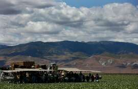 Field workers harvest iceberg lettuce April 9, 2015 in the Westlands Water District near Five Points, Calif. Westlands is the largest agricultural water district in the country, providing water to 700 farms in over 1,000 square miles of land in the Central Valley.