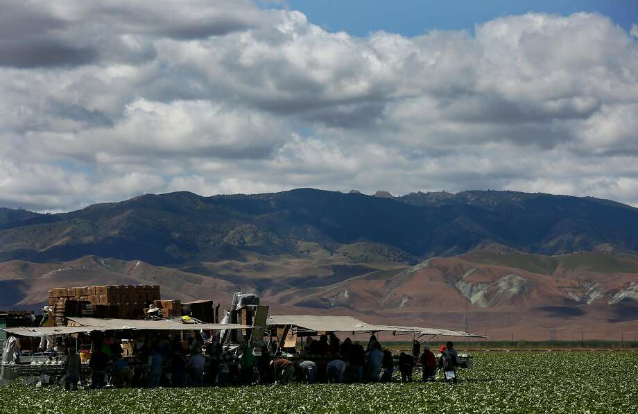 Field workers harvest iceberg lettuce April 9, 2015 in the Westlands Water District near Five Points, Calif. Westlands is the largest agricultural water district in the country, providing water to 700 farms in over 1,000 square miles of land in the Central Valley. Photo: Leah Millis, The Chronicle