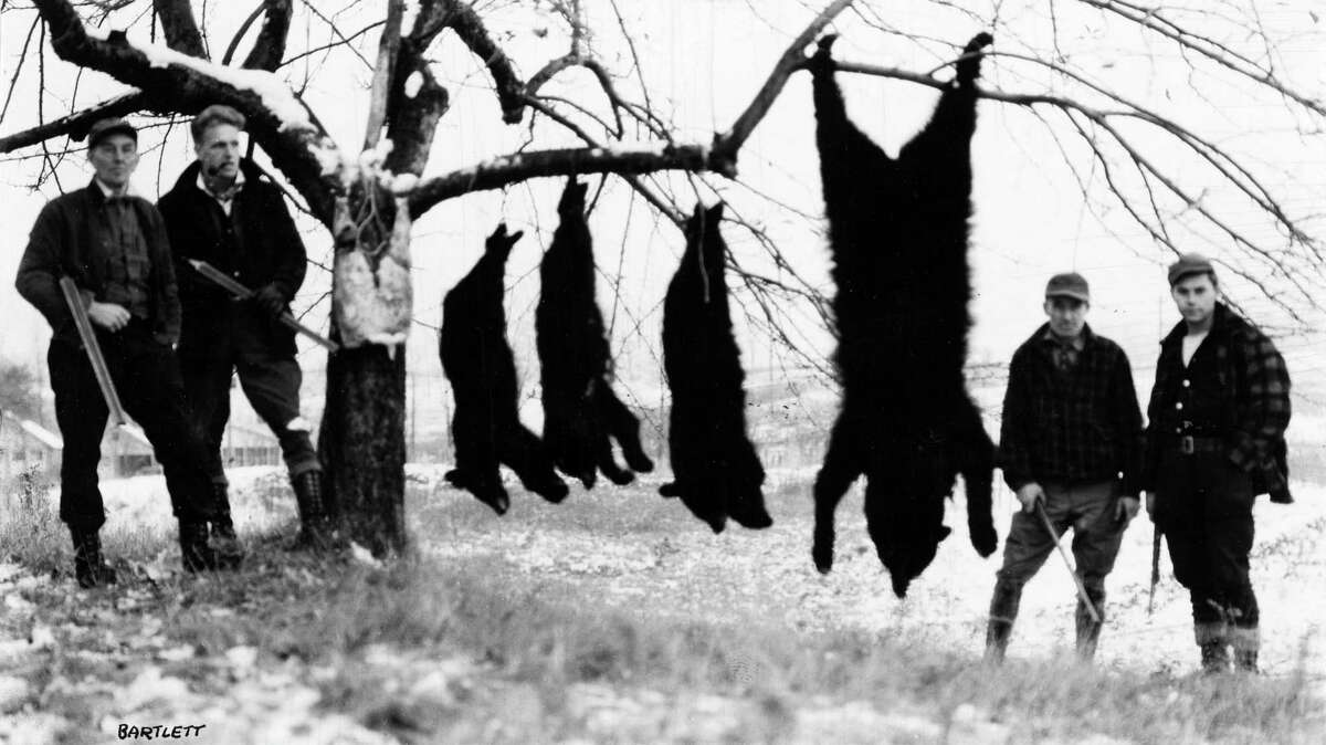 Bear hunting scene from 1933. (Times Union Archive)