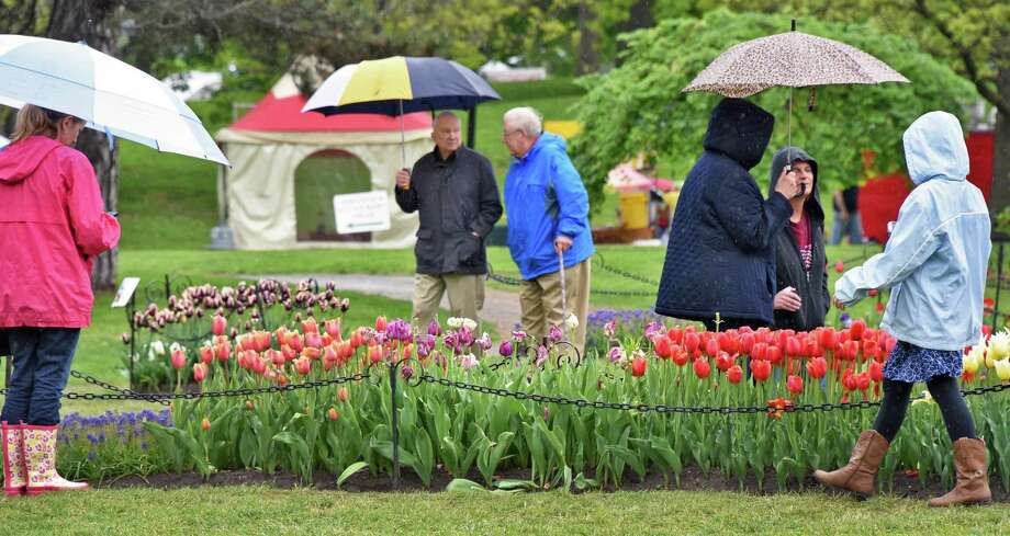 Sheltered under umbrellas, festival goers marvel over the flower beds at the 69th Annual Albany Tulip Festival Saturday May 13, 2017 in Albany, NY.  (John Carl D'Annibale / Times Union) Photo: John Carl D'Annibale / 20040468A