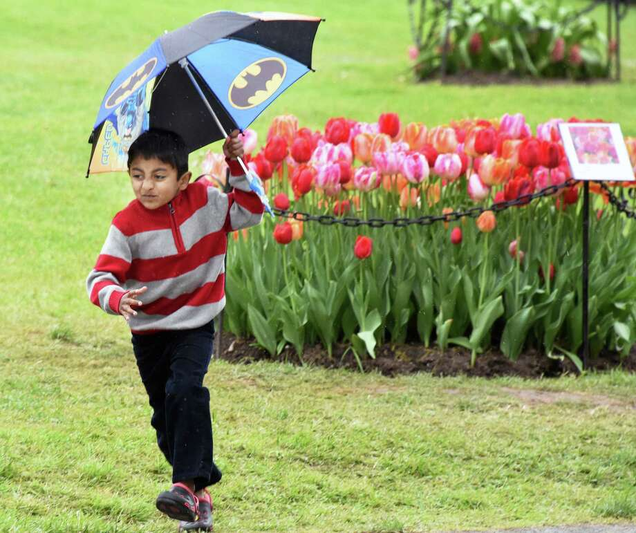 Five-year-old Chaitan Ravilla of East Greenbush runs back to his family as the rain begins at the 69th Annual Albany Tulip Festival Saturday May 13, 2017 in Albany, NY.  (John Carl D'Annibale / Times Union) Photo: John Carl D'Annibale / 20040468A