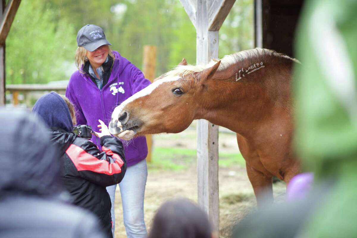 Volunteer coordinator Suzie Cosban laughs when Sassy, a rescued mustang, takes interest in one of her visitors' cameras.