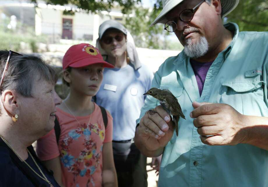 Licensed bird bander Craig Hensley holds a Wilson's Warbler in his hand and shows it to guests at Mitchell Lake Audubon Center on May 13, 2017. Photo: Kin Man Hui /San Antonio Express-News / ©2017 San Antonio Express-News