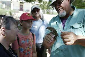 Licensed bird bander Craig Hensley holds a Wilson's Warbler in his hand and shows it to guests as the Mitchell Lake Audubon Center holds its Migratory Bird Festival on Saturday, May 13, 2017. At the festival, guests saw how birds were banded in order to keep track of their migratory patterns, went on a nature trail tour and other presentations about birds. There were also crafts and games to entertain the younger crowd. Since 2001 when the Audubon Center was established at Mitchell Lake, the mission of the center is focused on educational programs along with preserving open space to protect wildlife and habitat. With about 1,200 acres of property, MLAC has become a sanctuary for hundreds of migrating birds.  (Kin Man Hui/San Antonio Express-News)