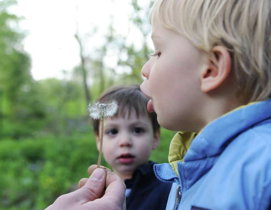 Greenwich's Grant George, 2, blows on a dandelion during the Nature Sprouts Mommy & Me class at Audubon Greenwich on Wednesday. Designed for kids 18 to 36 months old and their parents, the program gives children a chance to explore and discover nature through a different theme each week. Activities range from songs and stories to animal experiences and investigative walks through the woods. Photo: Tyler Sizemore / Hearst Connecticut Media / Greenwich Time