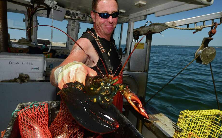 Mike Kalaman, a Norwalk, Conn. lobstermen, fishes on Long Island Sound for The Norm Bloom and Sons Company Saturday in 2016. Photo: Erik Trautmann / Hearst Connecticut Media / Norwalk Hour