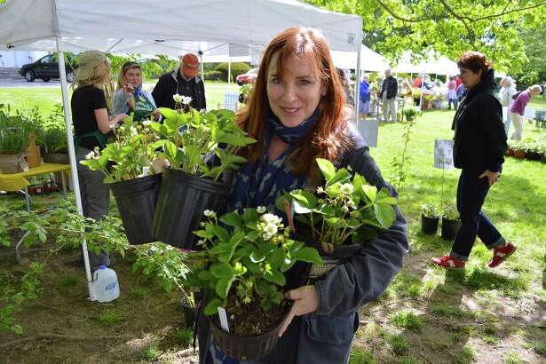 Betsy Kahn of Westport gathers some plants to purchase at the Westport Garden Club's annual sale, Friday, May 12, 2017, at Saugatuck Congregational Church in Westport, Conn.