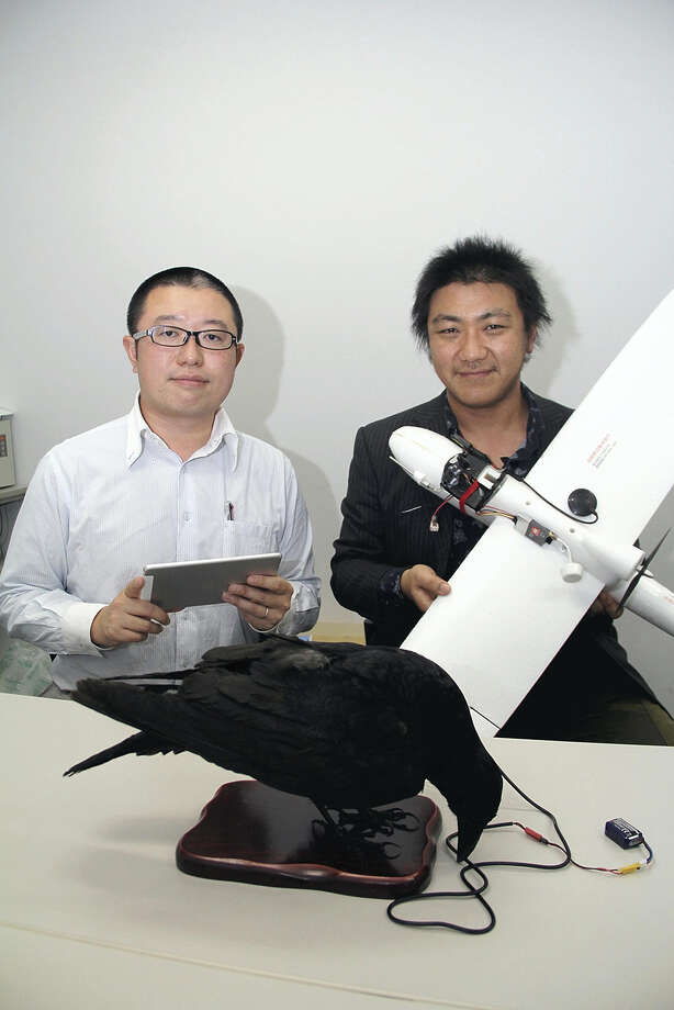 Naoki Tsukahara, left, and Ko Sueda are working on a project to facilitate communication with crows through the use of a crow-like robot and drone. Photo: The Yomiuri Shimbun. / The Yomiuri Shimbun