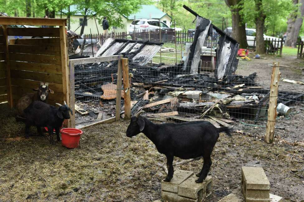 Goats are kept in a pen next to the remains of a torched building on Cold Spring Avenue on Monday, May 15, 2017, in Schodack, N.Y. Authorities said someone set fire to the structure on Sunday and the fire is considered a hate crime. Schodack police do not identify the race or religion of the homeowners but a source says the victims are black. (Will Waldron/Times Union)