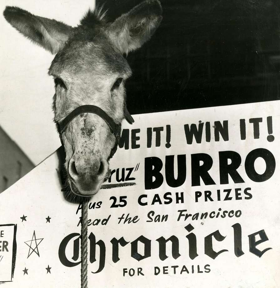 San Francisco Chronicle contest offered a chance to win a genuine Vera Cruz burro, and 25 cash prizes. December 15, 1954 Photo: Bill Young, San Francisco Chronicle