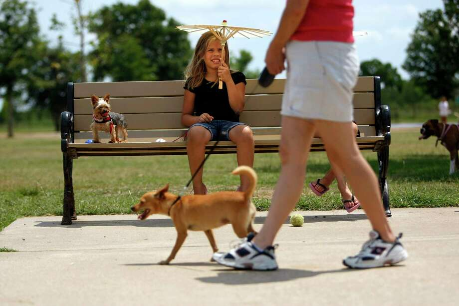 A new on-demand dog walking app has entered the Houston Market. Click the gallery to Houston's most popular dog breeds. Photo: Johnny Hanson, Staff / © 2012  Houston Chronicle
