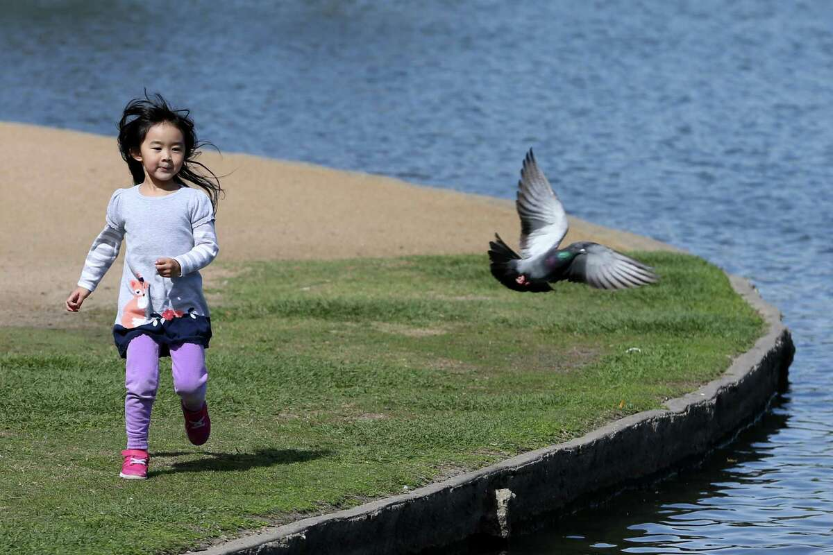 Grace Jiang enjoys the sunny weather as she chases a pigeon in Hermann Park.