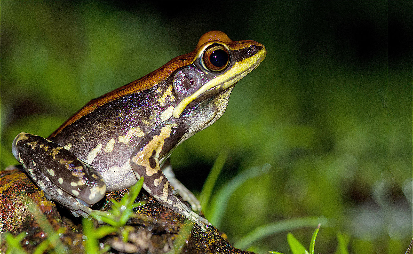 An odd discovery involving frog skin could end flu season ...